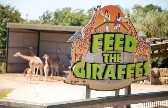 Longleat Safari Park 3D sign - Feed The Giraffes - The Grain - Theme Park Signage